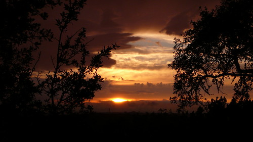 sunset sky sun color tree clouds landscape evening colorful branch texas