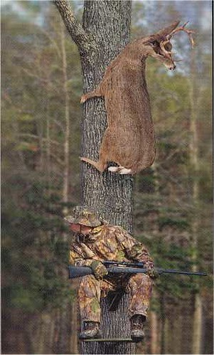 Whitetail Deer Funny Pictures