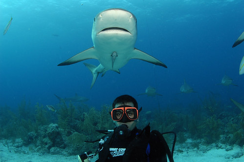 Touf with Sharks