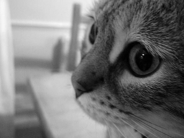lonely sad cat - photo #27