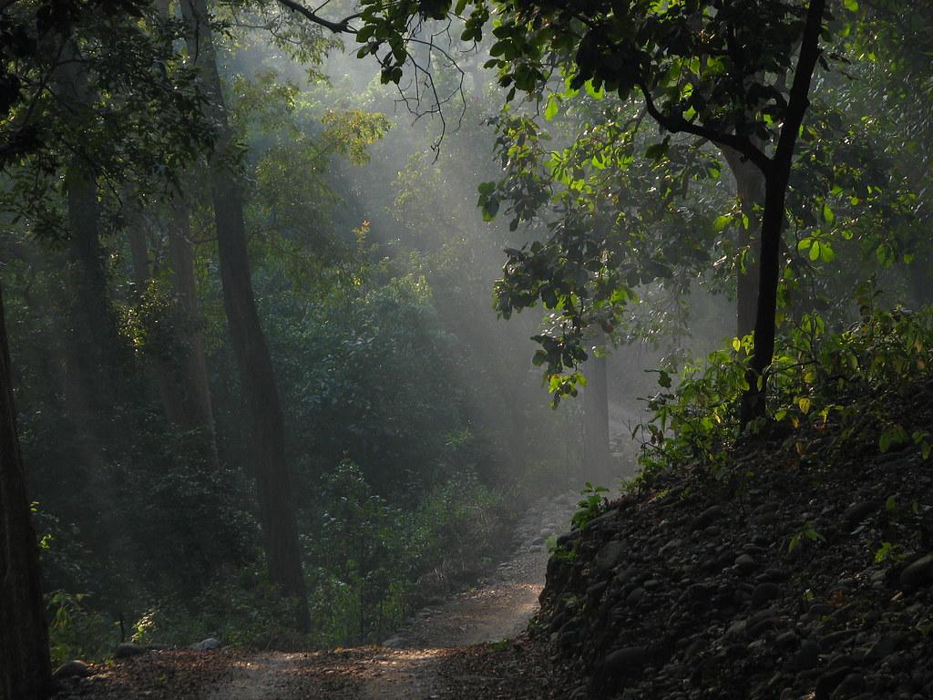 Corbett national park forest