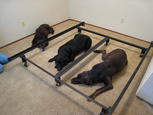 hello from raleigh getting help putting together the bed frame. Black Bedroom Furniture Sets. Home Design Ideas