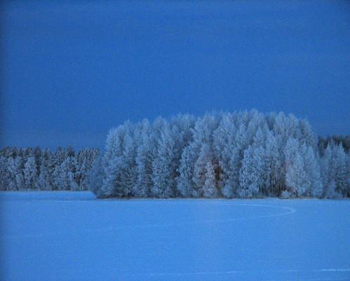 blue trees winter snow nature forest suomi finland landscape bravo frost january oulu lumi talvi maisema metsä tammikuu luonto sininen 333views puut kuivasjärvi pakkanen abigfave impressedbeauty