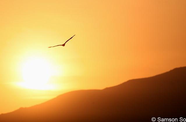 麻鹰飞机折法图解