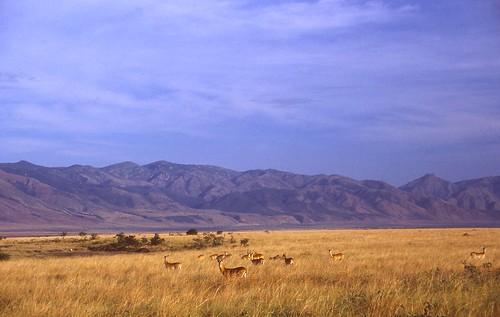 travel animals landscapes tiere reisen 1987 rwanda landschaften naturesfinest ruanda