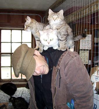 Cats climb on human cat tree
