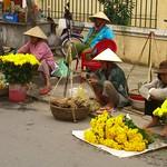 Carnations - Danang, Vietnam