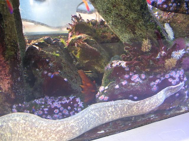Santa Monica Pier Aquarium Flickr Photo Sharing