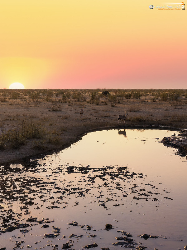 Gemsboks on the waterhole
