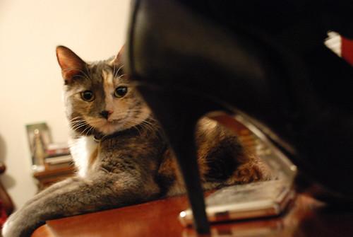 Cat Con Boot