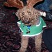 Small photo of Moby The Reindeer