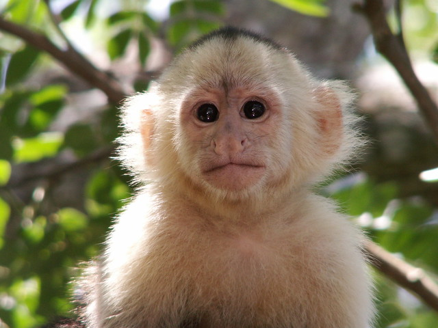 Face to face monkey