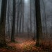 Misty Path to Flat Top Mountain by LynchburgVirginia ★