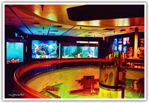 Aquarium at the Pier