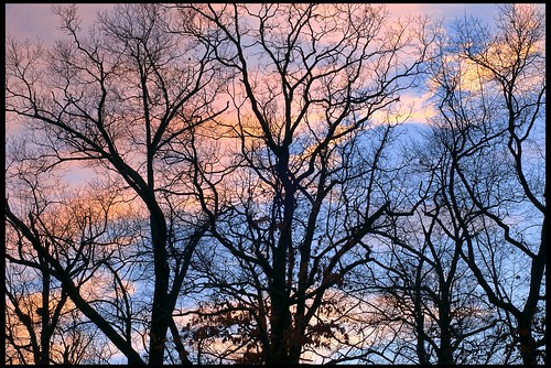 trees sunset time newhampshire concord whitepark 50mmf14af