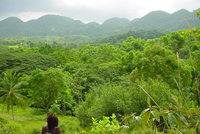 Westmoreland mountains, Jamaica
