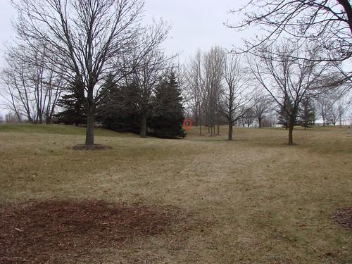 cleveland golf