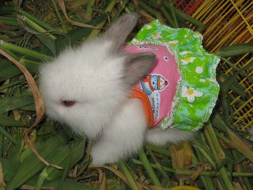 OMG!  A tiny bunny in a dress!