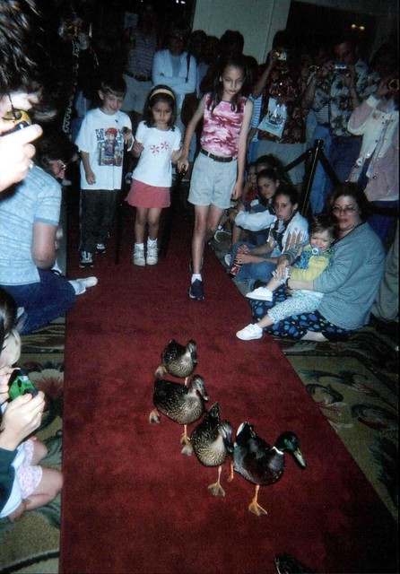The famous Peabody Hotel ducks