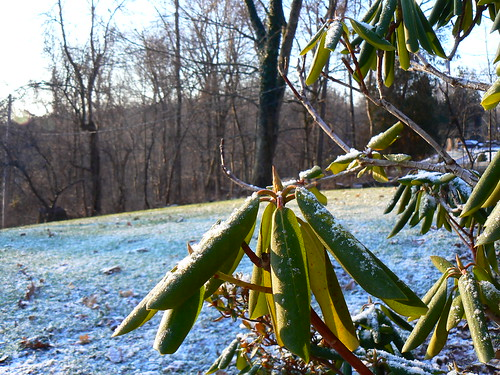 blue winter light snow green yard gold