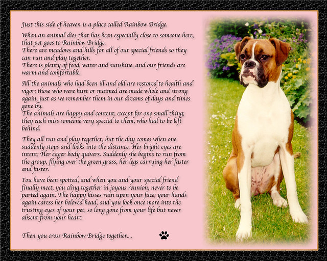 Boxer Dog Poem http://www.flickr.com/photos/mike-park/377386943/