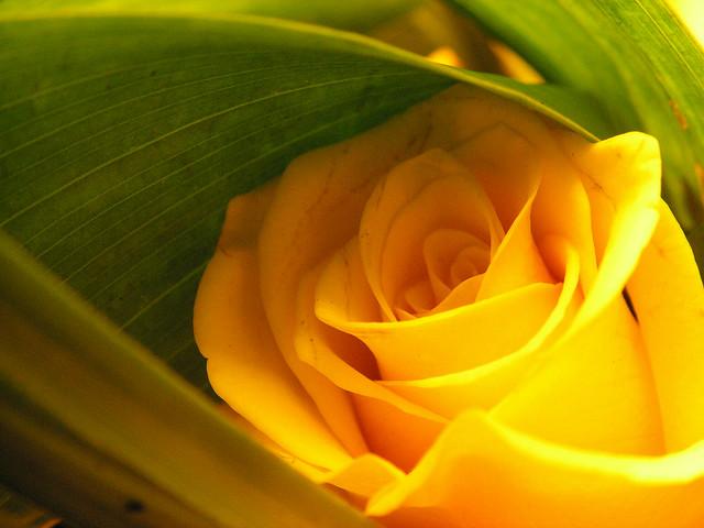Quinta rosa amarela !!!!