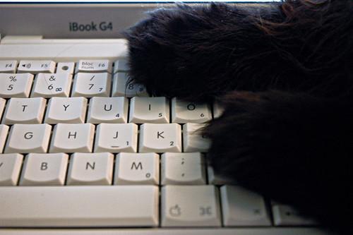 Cats love Mac