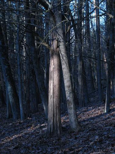 trees sunrise woods