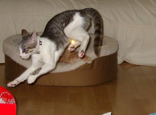 kitten jump