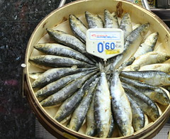 animal, herring, fish, fish, seafood, forage fish, oily fish, food, dish, shishamo,