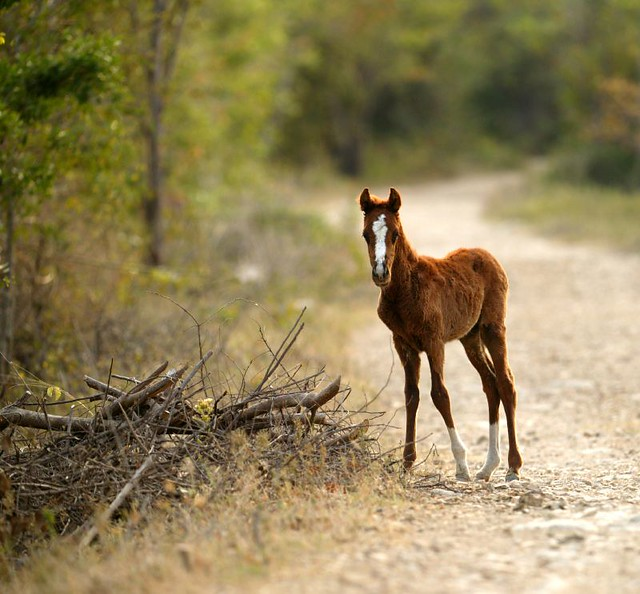 BABY MUSTANG | Flickr - Photo Sharing!
