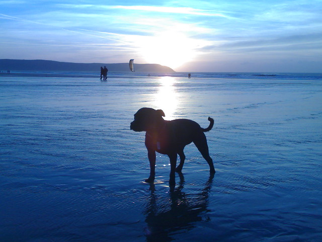 Matilda on Woolacombe beach
