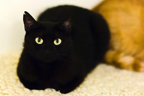 Cat eyes on black body