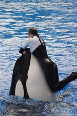 animal, marine mammal, whale, killer whale,