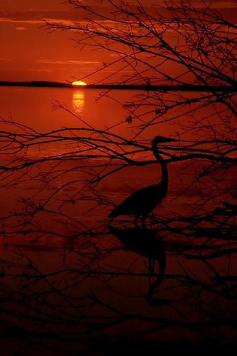 sunset sky sun reflection heron nature water birds animals wildlife magnoliapark sigma70300mmapodgmacro 250v10f pentaxk10d lakeapopka impressedbeauty goldenphotographer diamondclassphotographer