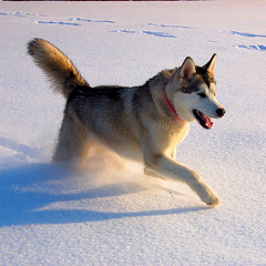 yuki snow run