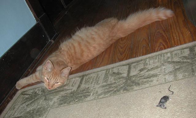 Milo the Mouser