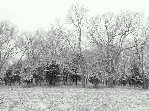 trees winter blackandwhite snow mountains home landscape tennessee hills snowday