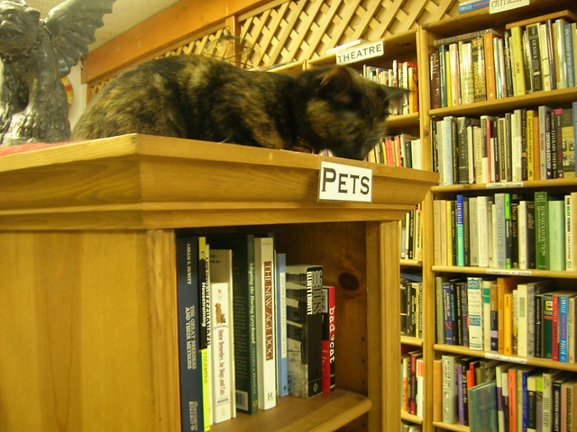 Bookstore cat at Ophelias Books