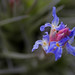 Tillandsia by V@n