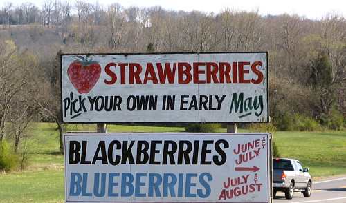 Get ready to pick your own strawberries