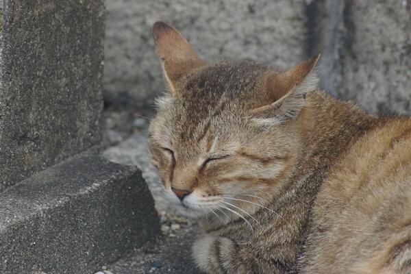 試写4:猫