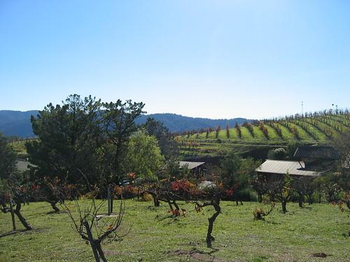 santa cruz mountains ridge vineyards