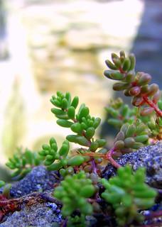 Alien pod plants