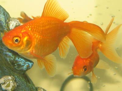 Pretty Fish Flickr Photo Sharing