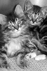 Cat Adoption Spokane Valley