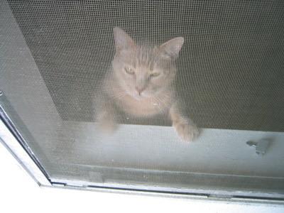 napoleon, cat IMG_0656.JPG