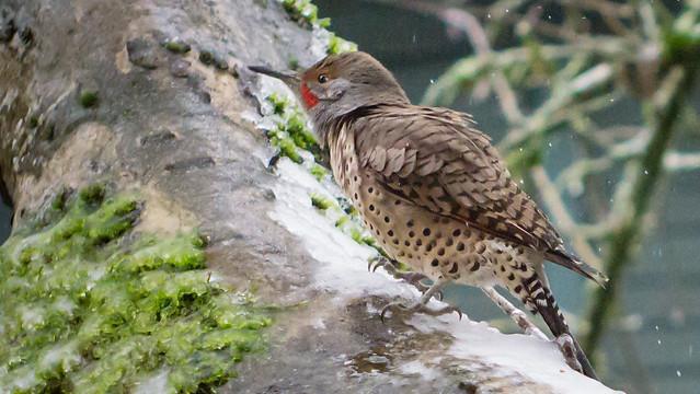 2016-1209_birds_-02453