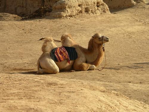 Camel at Gaochang
