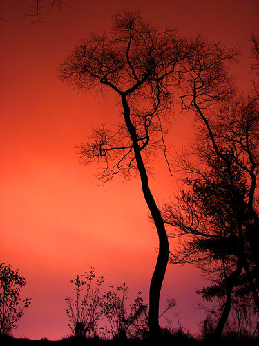 christmas longexposure nightphotography pink trees winter sunset red sky orange color colour tree nature colors beautiful silhouette backlight night speed catchycolors outdoors treesilhouette evening md flora backyard bravo colorful long exposure pretty december branch colours nocturnal purple bright suburban vibrant branches horizon suburbia peach violet vivid maryland columbia eerie christmastree calm creepy luck shutter fractal suburbs serene nightsky backlit tradition melon silhouetted radiant phelps plantlife afterdark prettysky 30seconds shutterspeed lightpollution lowshutterspeed branching aftersunset prettycolors prettycolours salmonpink silhouettetree phelpsluck phelpsluckmd thesilhouettetree